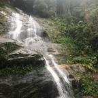 The Urban forest-Tijuca rainforest